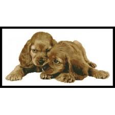 Spaniel Puppies - #11012