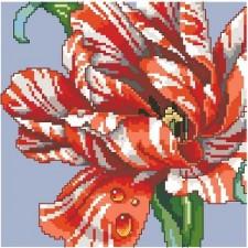 Striped Parrot Tulip Big Stitch