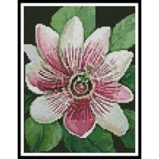 Mini Passion Flower - #11047