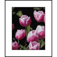 Pink Tulips I