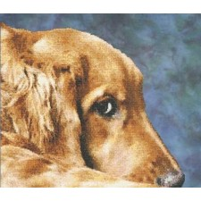 Golden Eyes - Golden Retriever