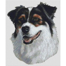Australian Shepherd - Tri-color II