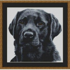 Black Lab - Dickens