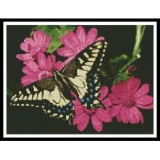 Butterfly 3 - #11075