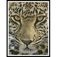 Mini Leopard Close Up - #11078