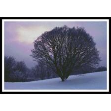 Maple Tree - #11079
