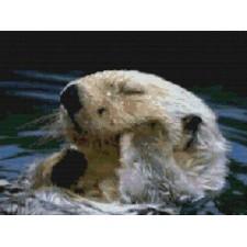 Otter Bathtime