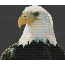 Regal Bald Eagle