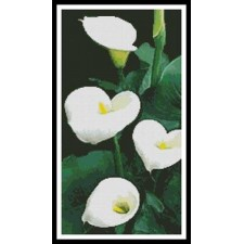 Calla Lilies - #11106