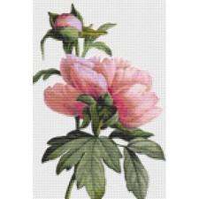 Flowers (REDOU07)