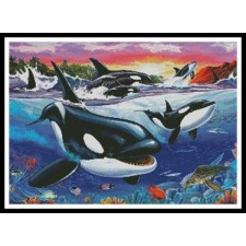 Killer Whales - #11140-INT