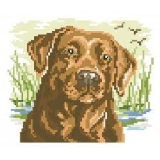 Labrador Big Stitch