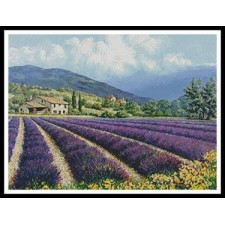 Fields of Lavender - #11270-PFLD
