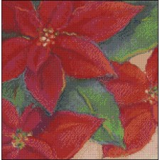 Poinsettia Portrait
