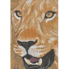 (OP=OP) Leeuwenkop - Lion in close up