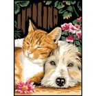 Poes en hond