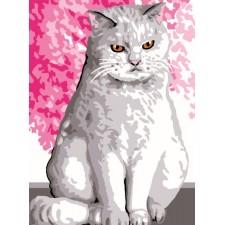 Wittekat - Chat blanc