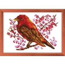 Rode vogel - Oiseau