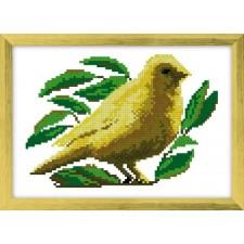 Kanaries - Canari