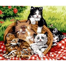 Mand met kittens - Panière de chats