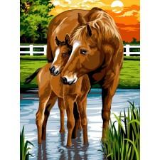 Paard en veulen - Les sabots dans l'eau
