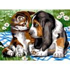 Hond en poes - Les yeux dans les yeux
