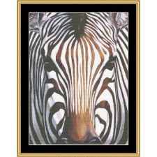 The Many Faces Collections - Zebra