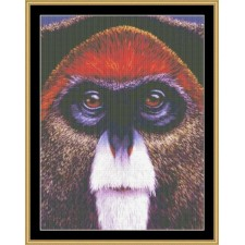 The Many Faces Collection - Monkey