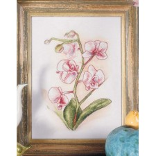 (OP=OP) Orchidee