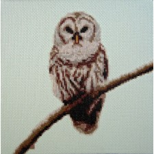 Uil op tak - Owl on Branch