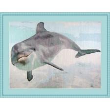 Dolfijn - Curious Dolphin