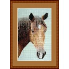 Paard - Let's Ride