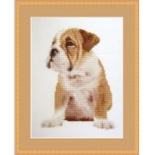 Gerimpelde hond -  Adorable Wrinkles