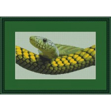 Slang - Snake View