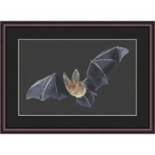 Vleermuis - Bat Catch