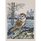 Kerkuil - Barn owl - Schleiereule