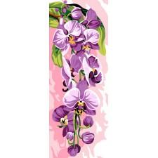 Orchidee - L'orchidée