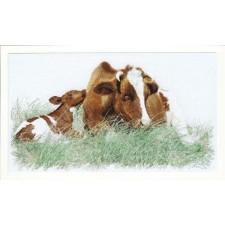 Bruine koe met kalf