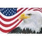 Amerikaanse Adelaar - American Eagle