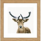 Counted cross stitch kit Deer